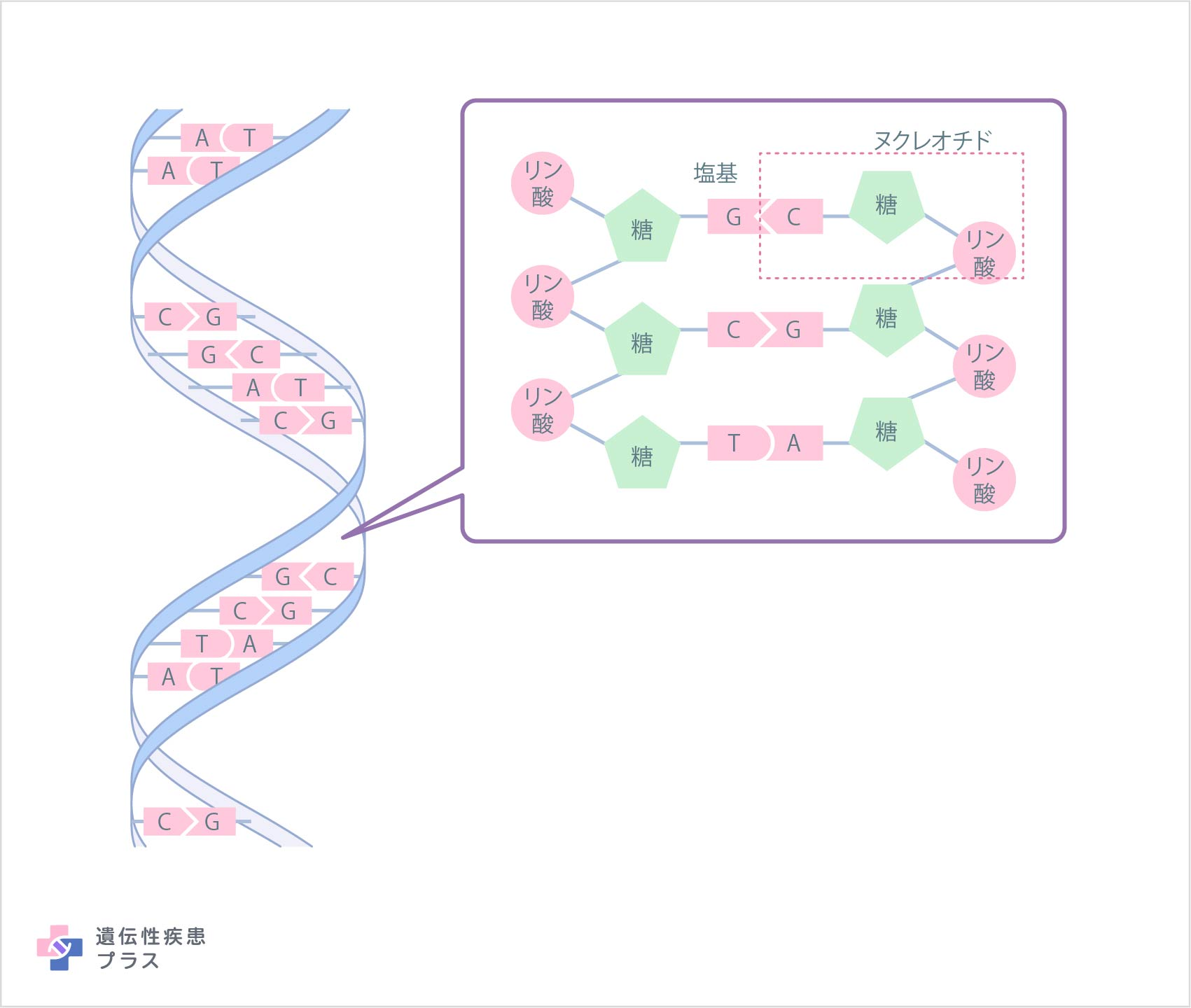 0820 What Is Dna