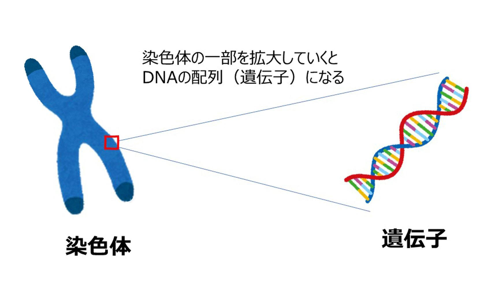 頭 の いい 子 遺伝