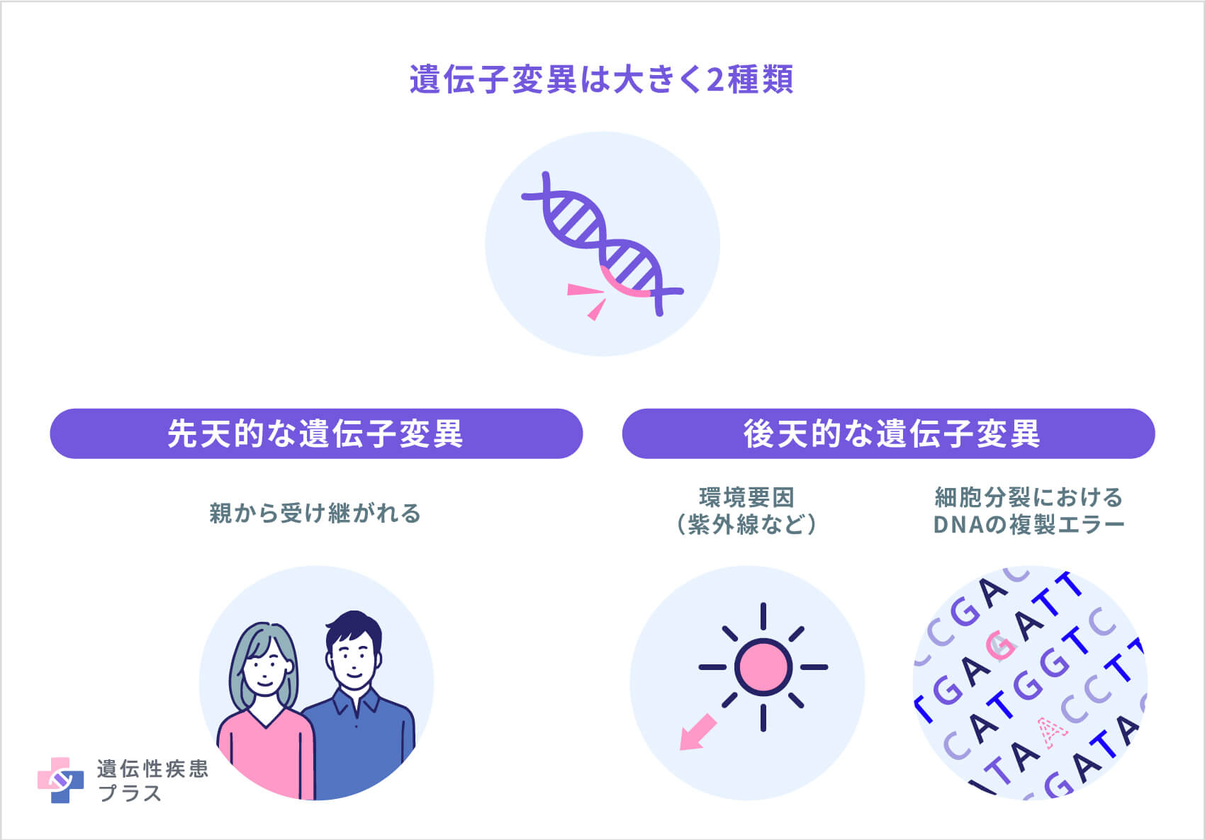 What Is A Gene Variant And How Do Variants Occur
