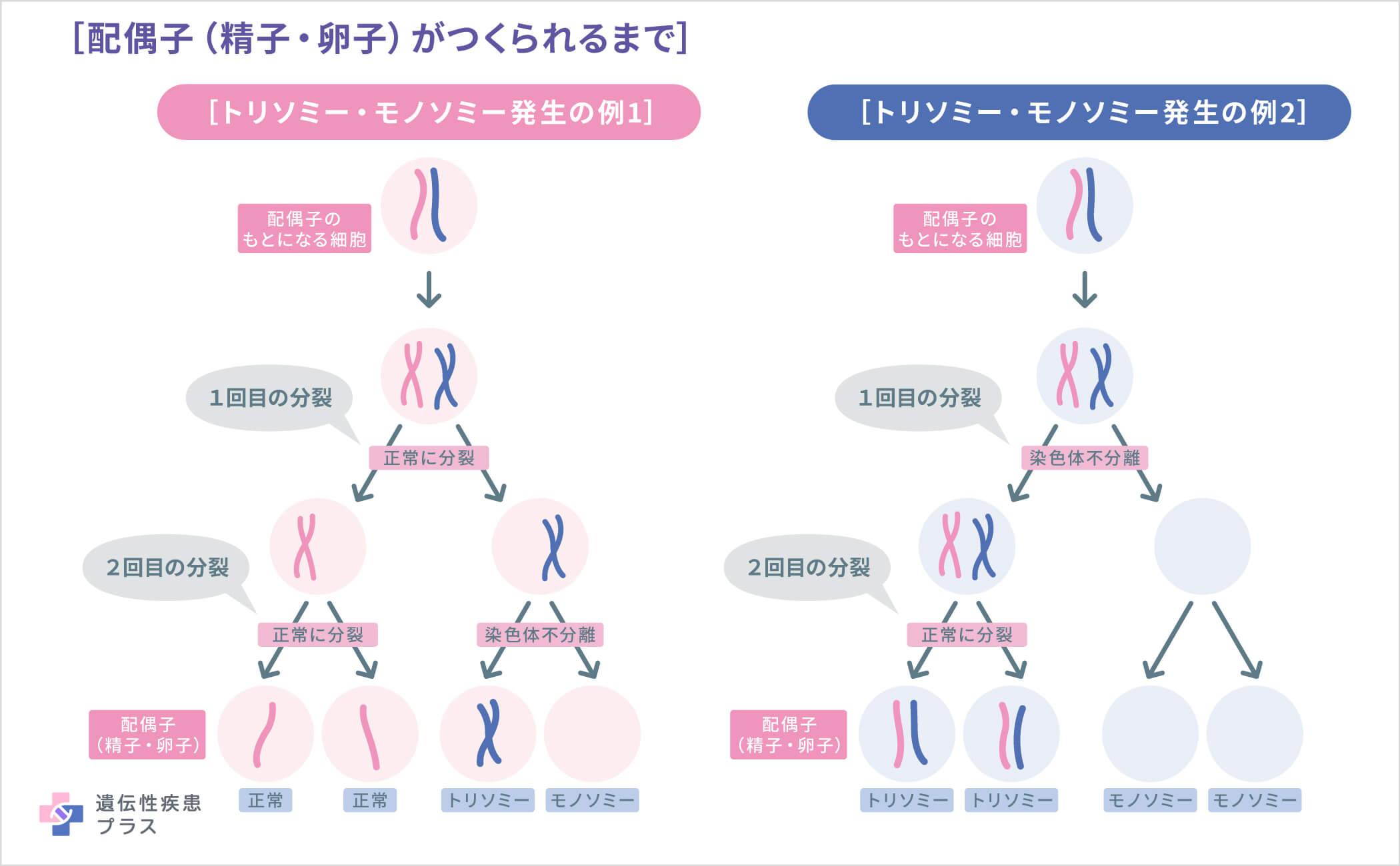 Trisomy 1